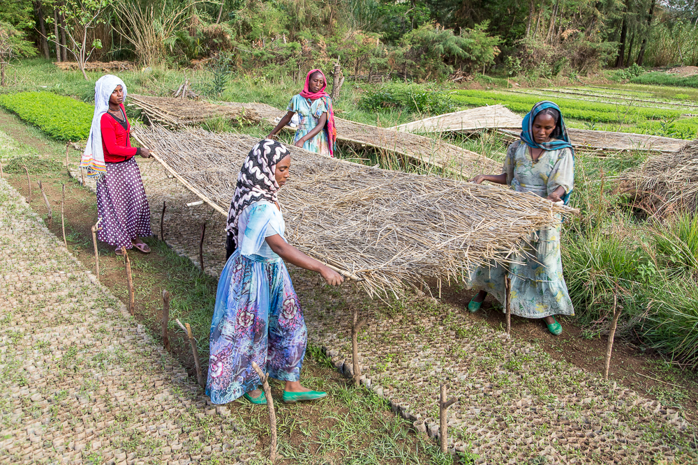 Women working in a nursery - Arsum, Ethiopia