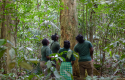 @GCCA+ Forest Conservation Programme in Suriname