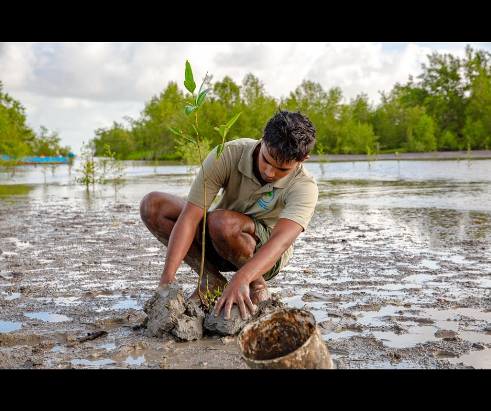 ©GCCA+ Mangrove Biodiversity Monitoring System in Suriname (Nickerie)